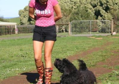 Australian-Labradoodle-Training