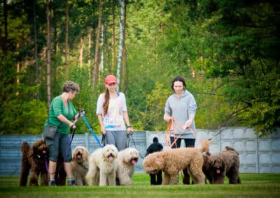 Australian Labradoodle with owners