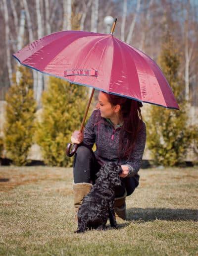 Szczenięta Labradoodle pod parasolem