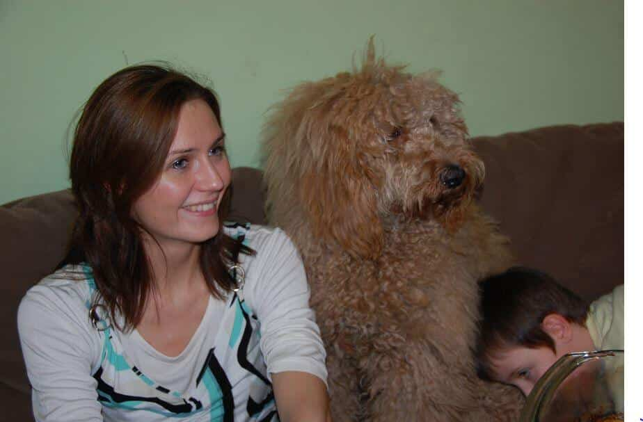 Australian Labradoodle Hairy Molly Passion