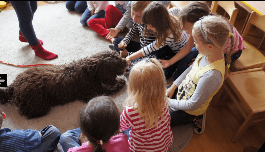 Edyta Gajewska Labradoodle w przedszkolu