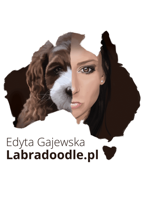 Australian Labradoodle - Breeding, breed, information, price