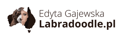 Australijskie Labradoodle - Hodowla, rasa, informacje, cena